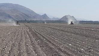 کاشت چغندر قند در قیروکارزین آغاز شد