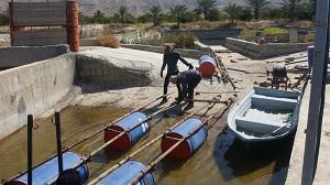 برای اولین بار در استان فارس؛ پرورش ماهیان گرمابی در قفس در استخر دو منظوره