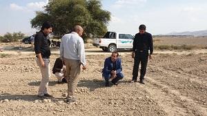 درآمد با صرفه برای کشاورز در کاشت کلزا