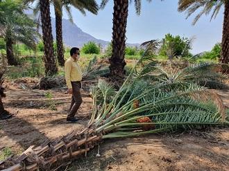 خسارت257 میلیارد ریالی از رگبار در قیروکارزین