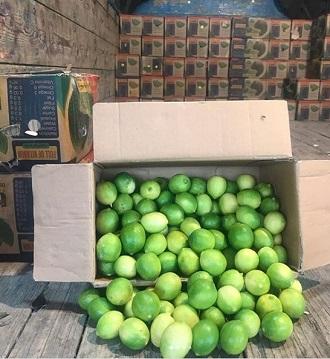 لیموی ترش قیروکارزین راهی بازار شد