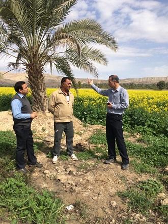 مسئول حفظ نباتات جهاد کشاورزی قیروکارزین مطرح کرد: تائید بیماری لکه سیاه در مزارع کلزای قیروکارزین/ توصیههای کاربردی برای تبدیل یک تهدید به فرصت